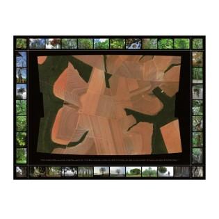 carton-artichaut-P3-4-web-600x600